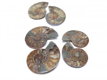 1 x Ammonitenpaar - geschnitten und poliert ca. 10 bis 12 cm Durchmesser