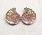 2er Set Ammoniten Anhänger groß gefasst als Paar an Öse ca. 45 - 50 mm