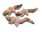 Krokodil Gravur aus versteinertem Holz ca. 100 x 40 mm
