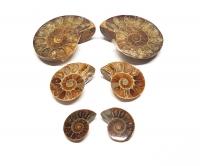 10 x Ammonitenpaare - geschnitten und poliert ca. 3 bis 5 cm