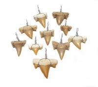 10er Set versteinerte Haifischzähne groß an Edelstahl - Öse ca. 25 - 35 mm